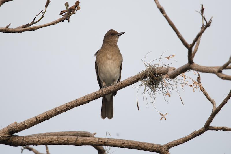 Swallows - Golondrinas