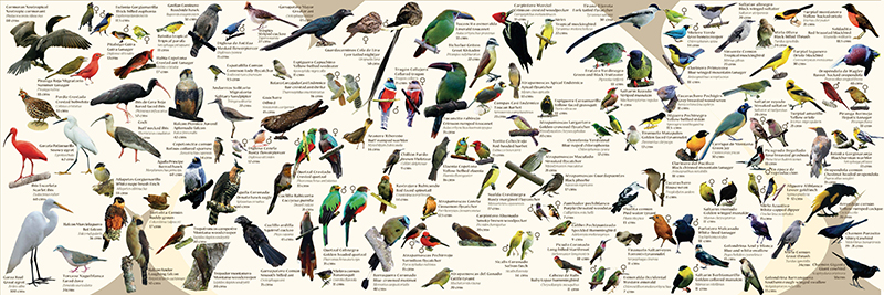 afiches de aves, banners