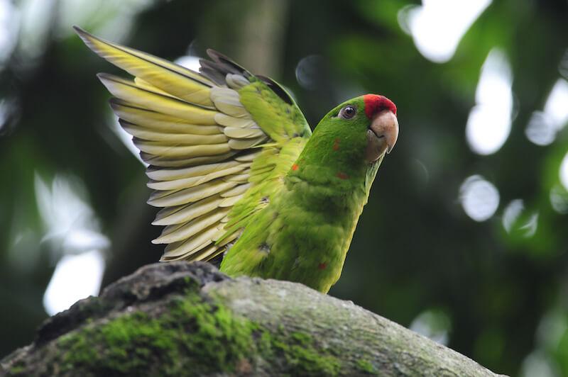 Parrots, Cotorras, Psittacidae