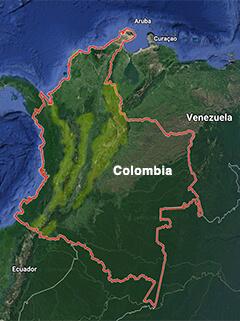 Buff-tailed coronet, colibri chupasavia