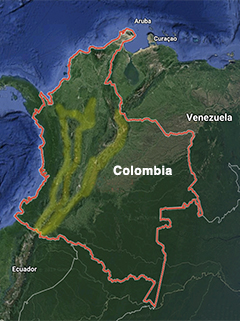 pharomachrus auriceps, quetzal colinegro, golden headed quetzal